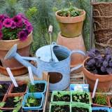 Bourse aux Plantes