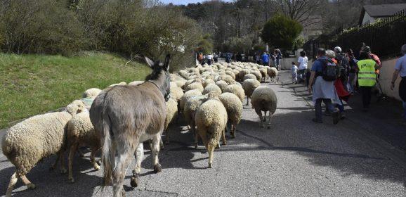 Transhumance et fête de laine